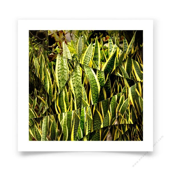 Fine Art Photograph Agave signed and numbered by hand